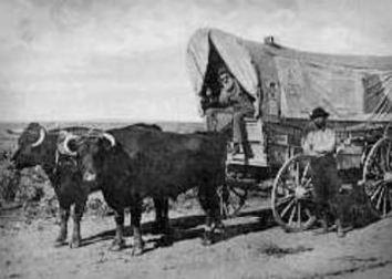 Oxen pulling a Prairie Schooner